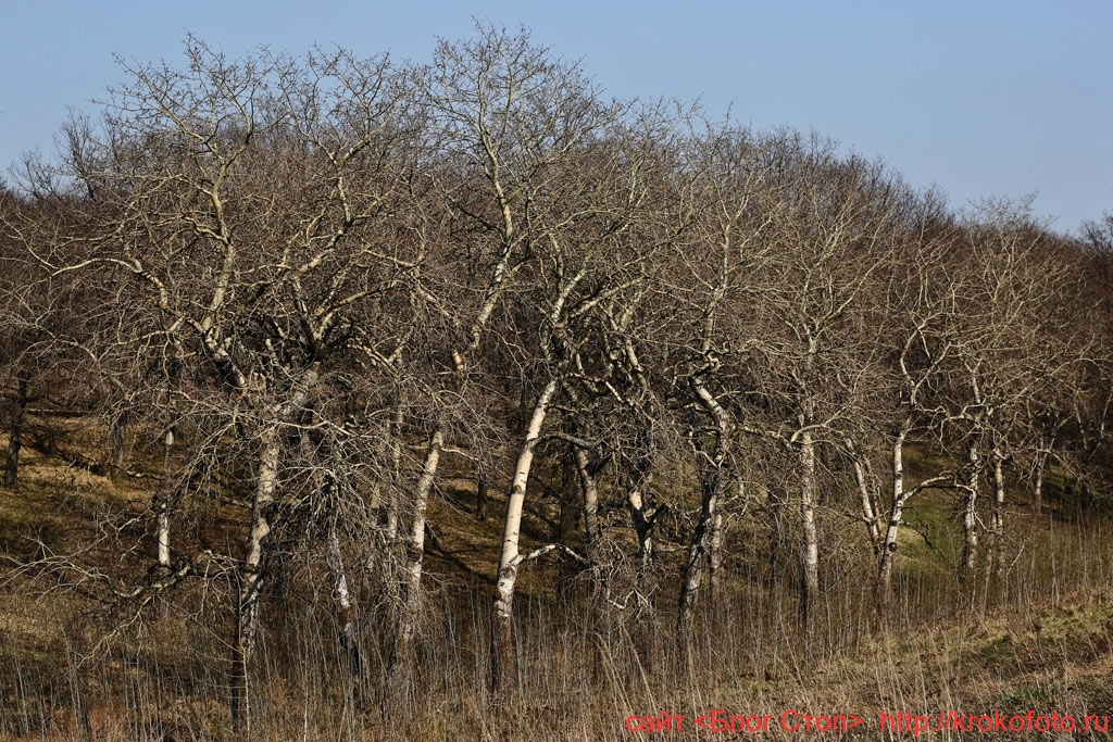 деревья 75