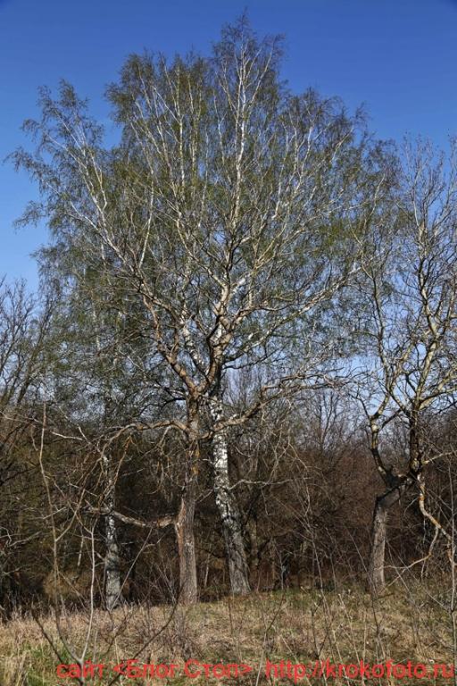 деревья 76