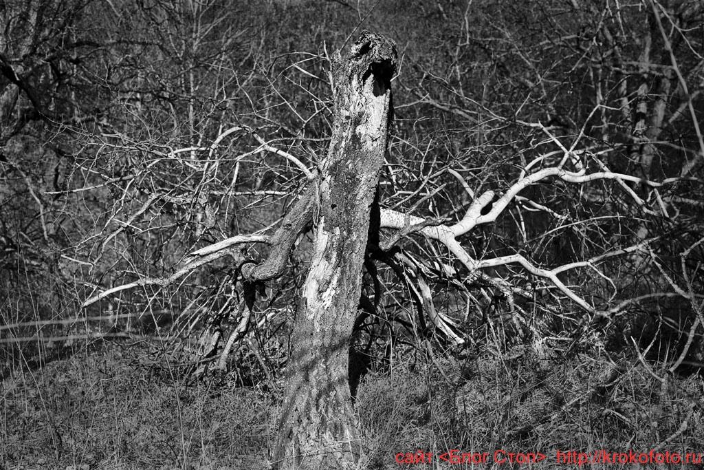 деревья 77