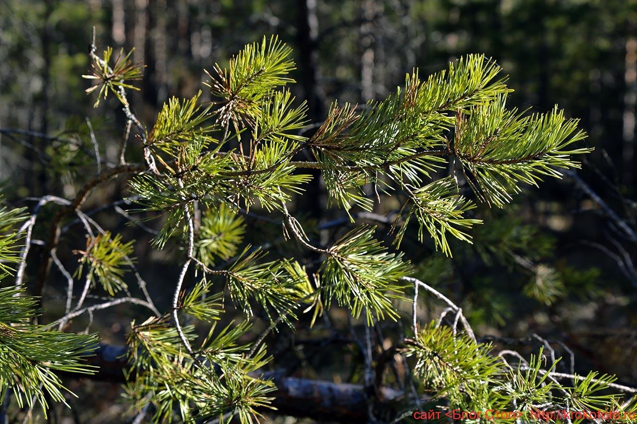 деревья 89