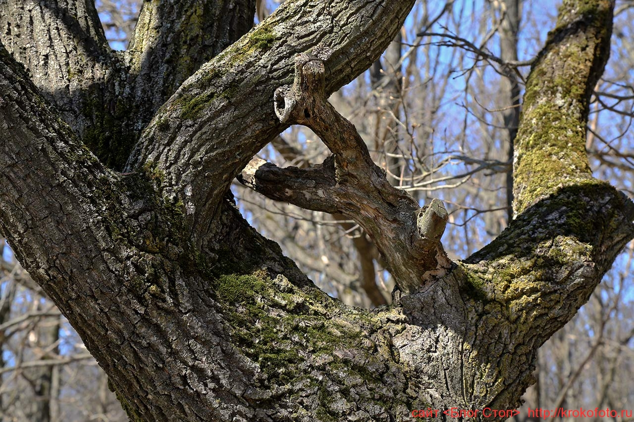 деревья 93