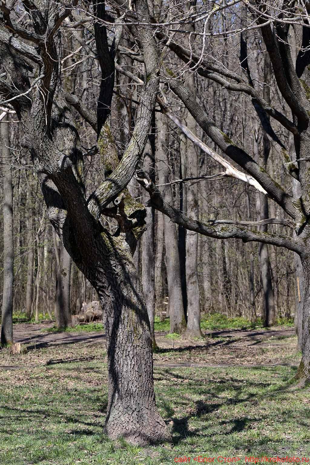 деревья 92