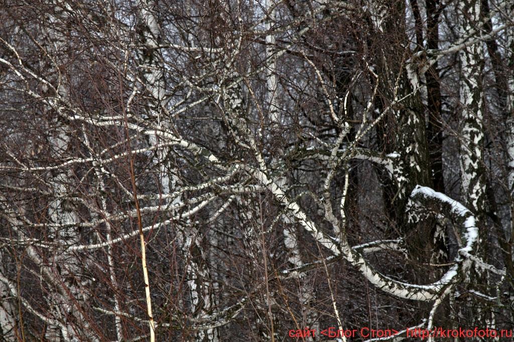 деревья 71