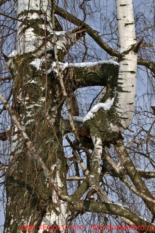 деревья 73