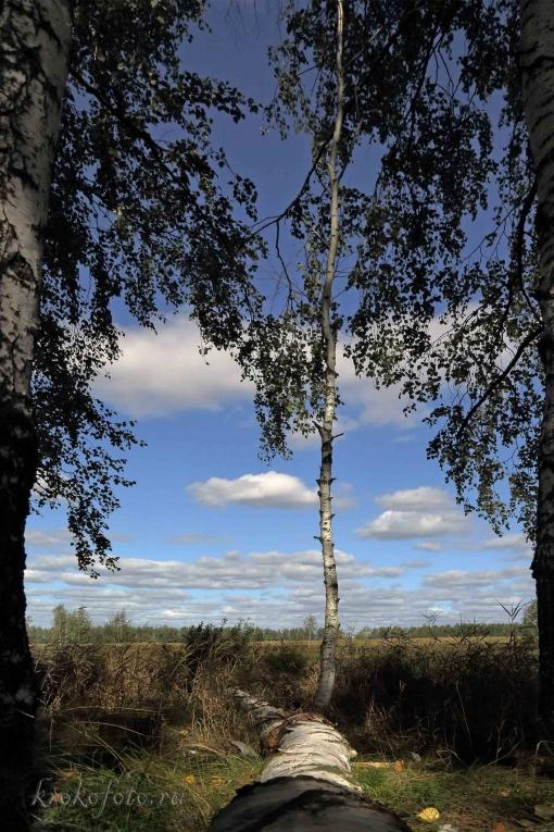 деревья 115