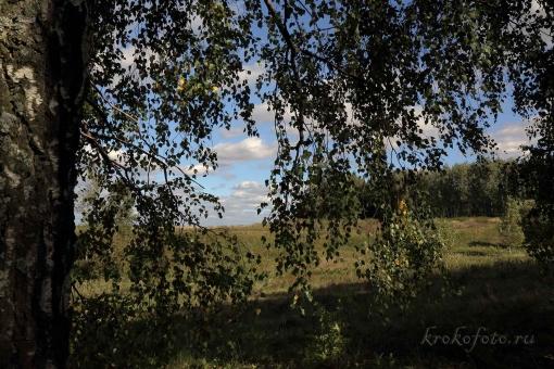 деревья 116