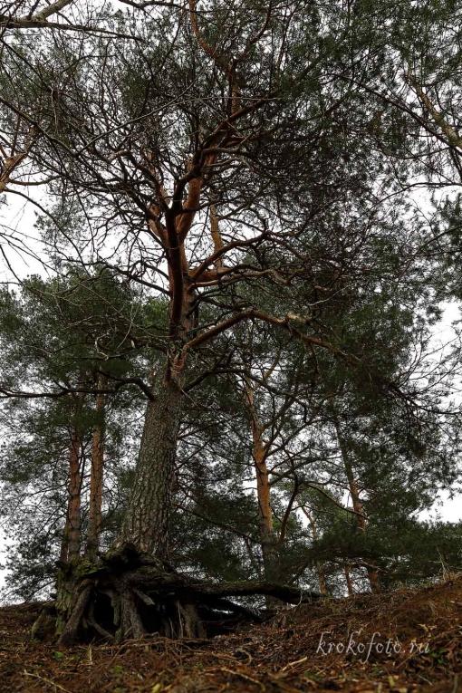 деревья 117