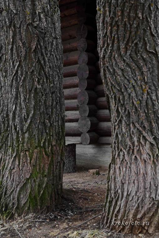 деревья 118