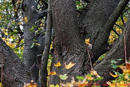 деревья 70