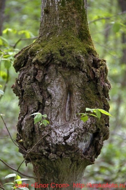 деревья 13