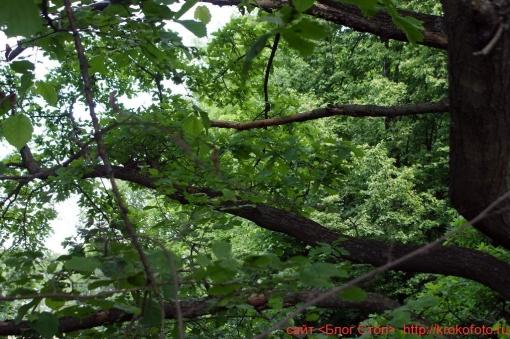 деревья 23