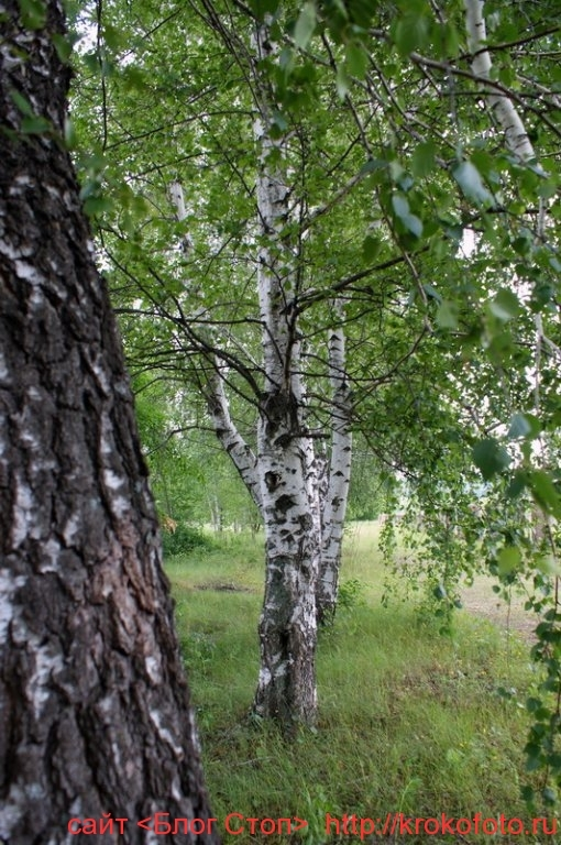 деревья 25
