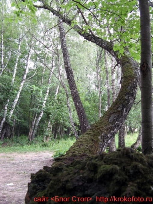 деревья 27