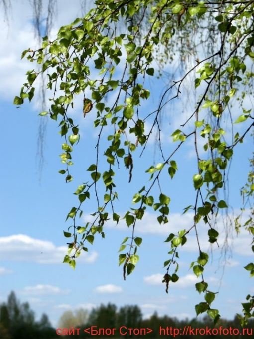 деревья 31