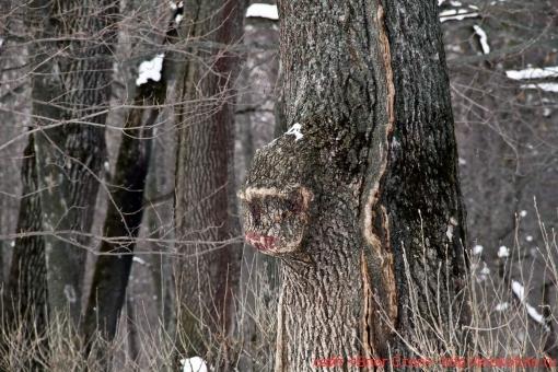 деревья 60