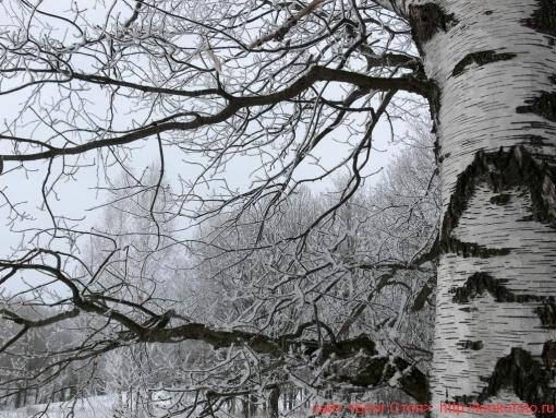 деревья 48