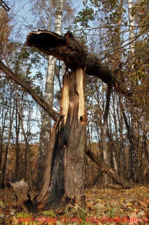 деревья 54