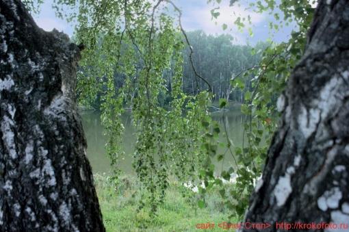 деревья 34