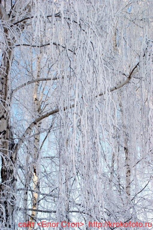 деревья 51