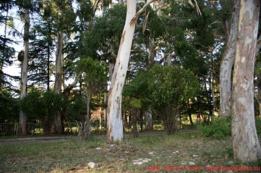 деревья 37