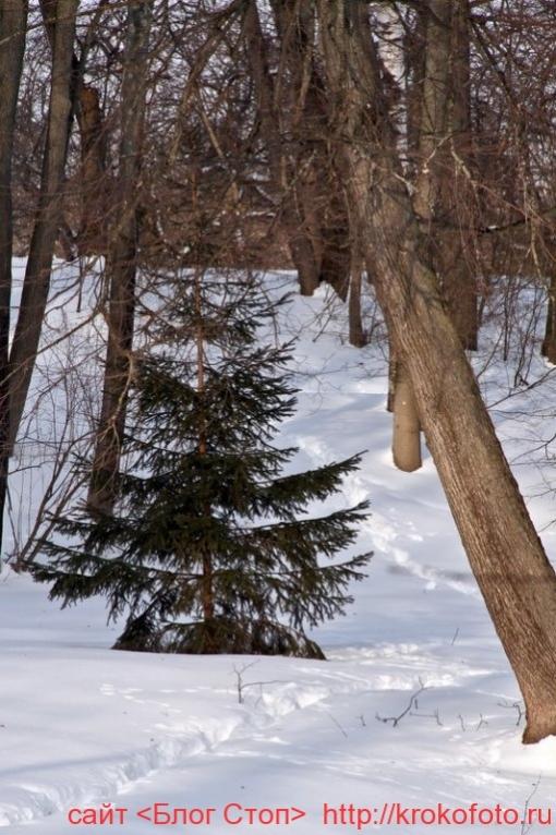 деревья 62