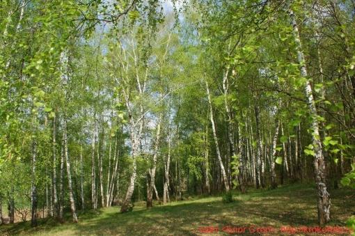 деревья 39