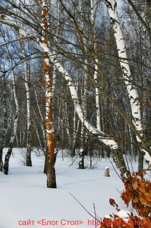 деревья 41