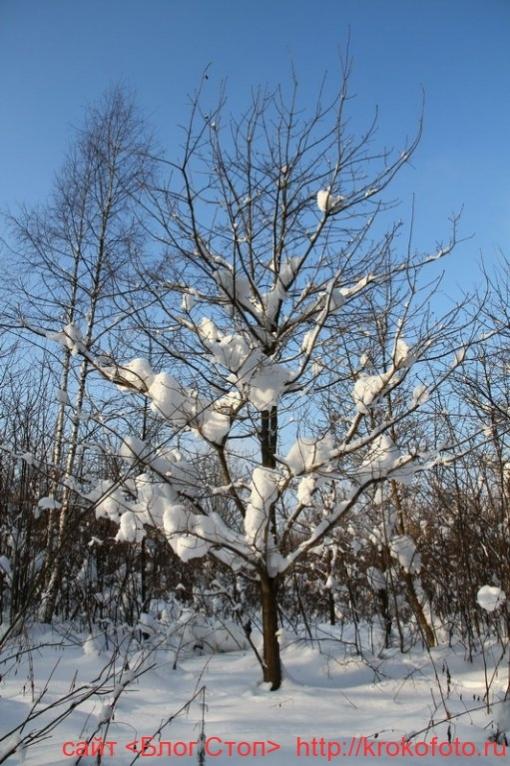 деревья 42