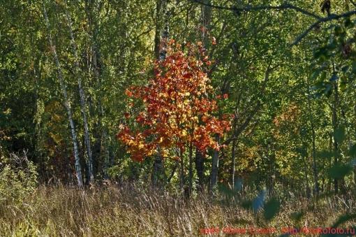 деревья 53