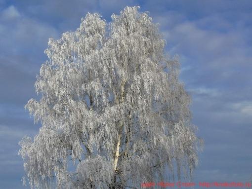 деревья 50