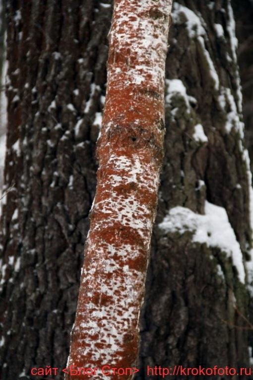 деревья 57