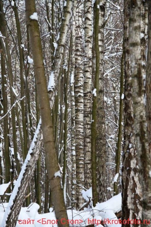 деревья 43