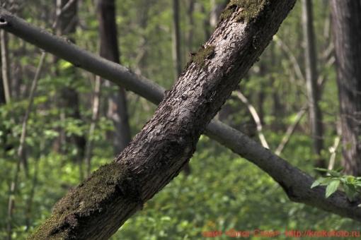 деревья 59