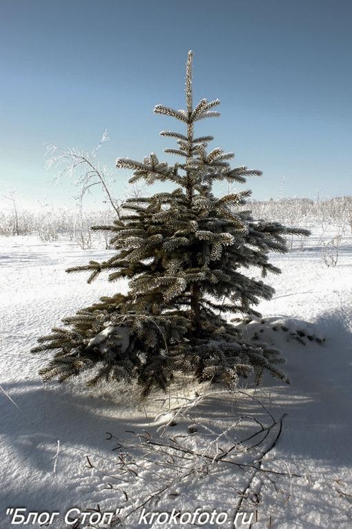 деревья 101