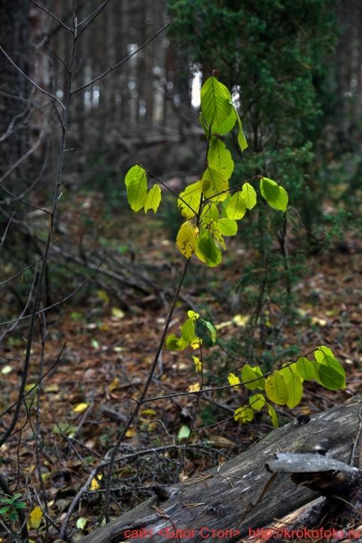 деревья 87