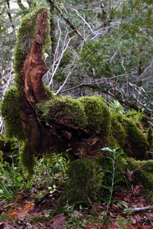 деревья 97