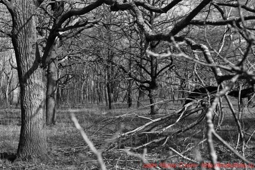 деревья 78