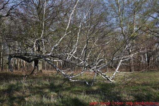 деревья 79