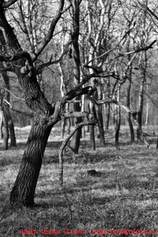 деревья 81