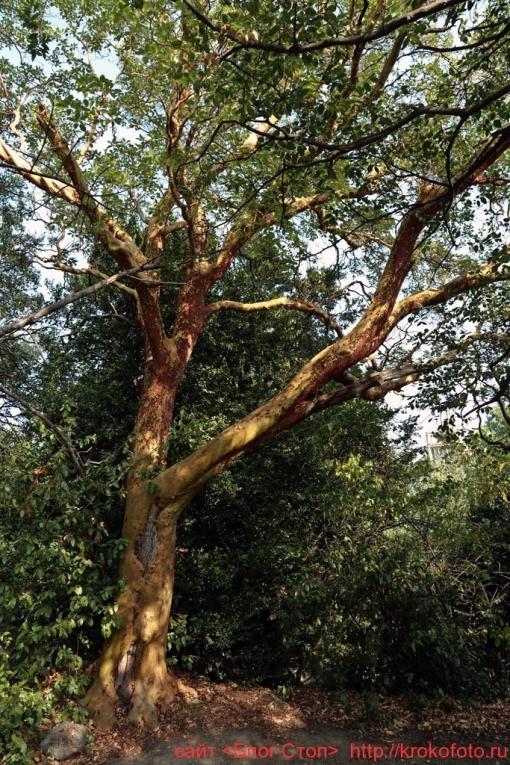 деревья 84
