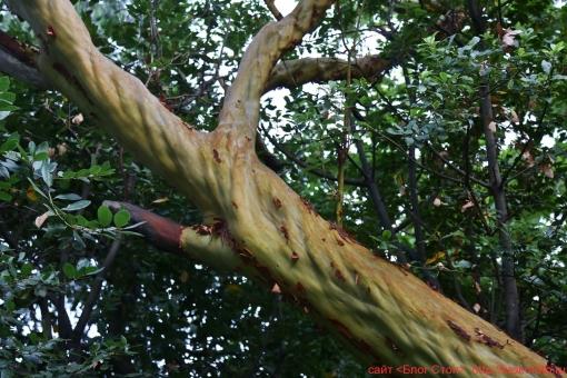 деревья 85