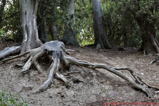 деревья 86