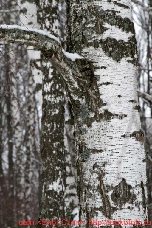 деревья 72