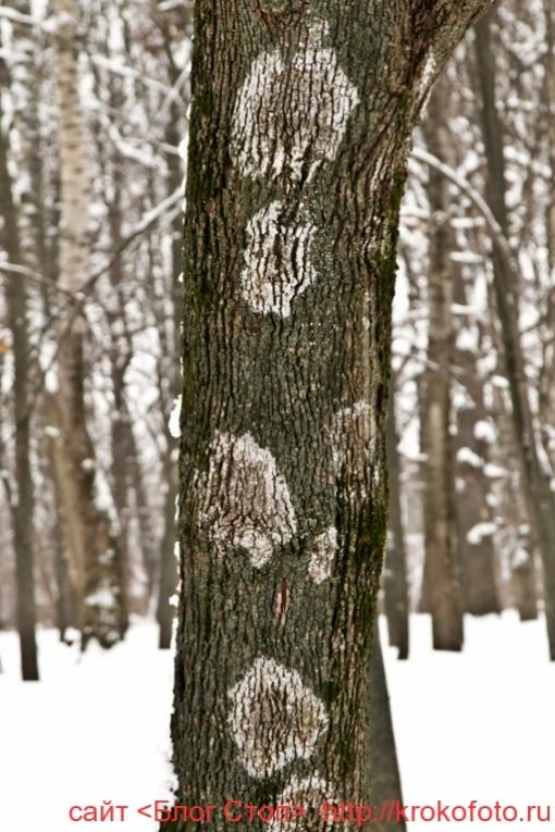 деревья 74
