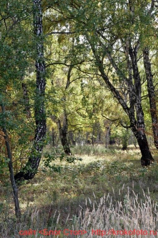 деревья 65