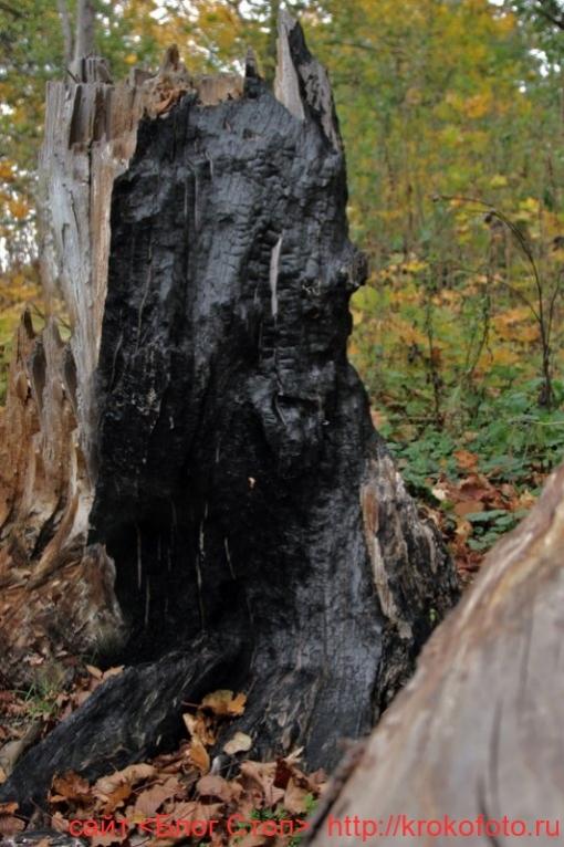 деревья 66