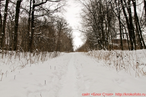Щёкино зимой 136