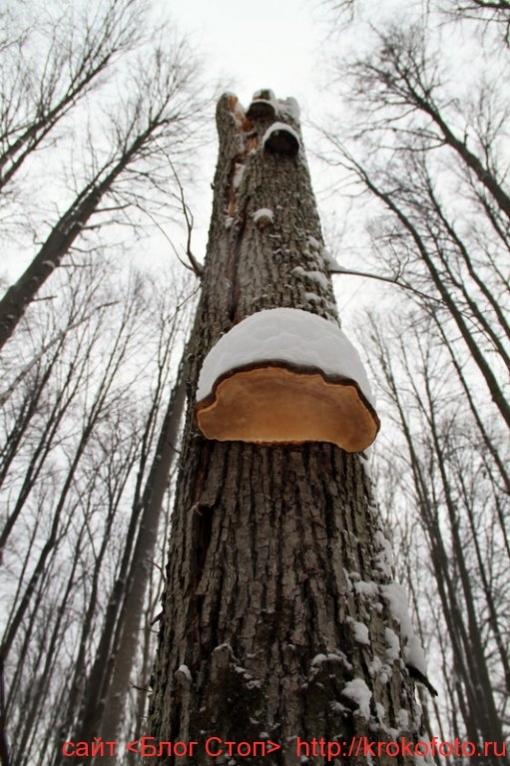грибы 11