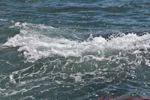 море 29