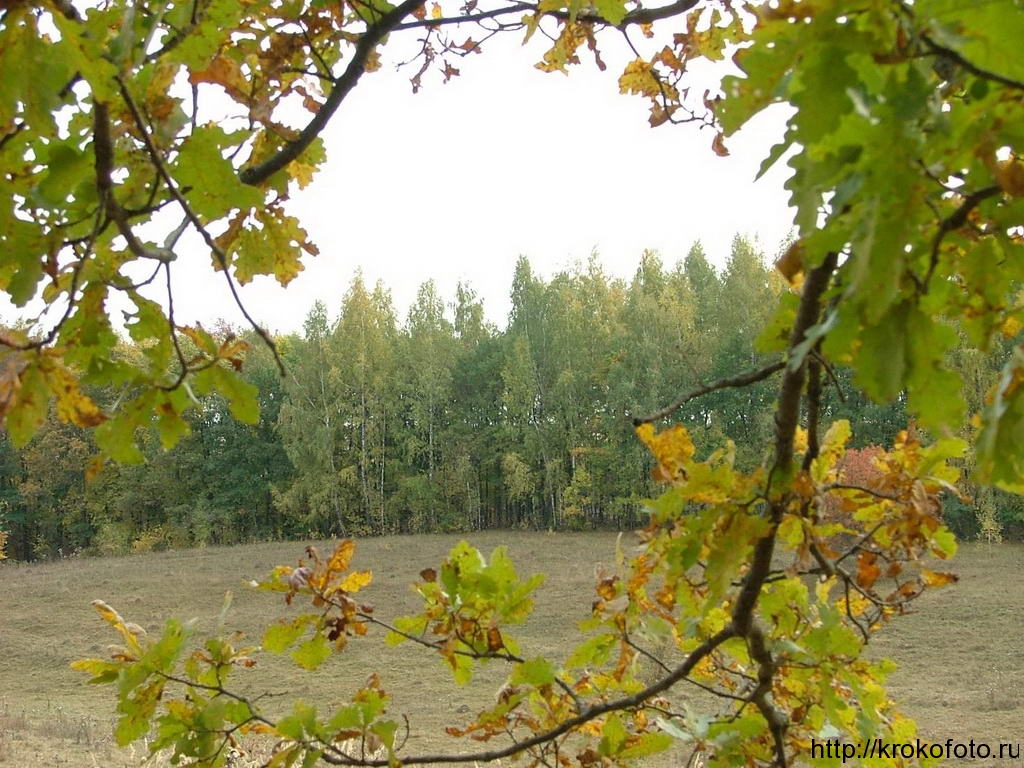 осенние пейзажи 14